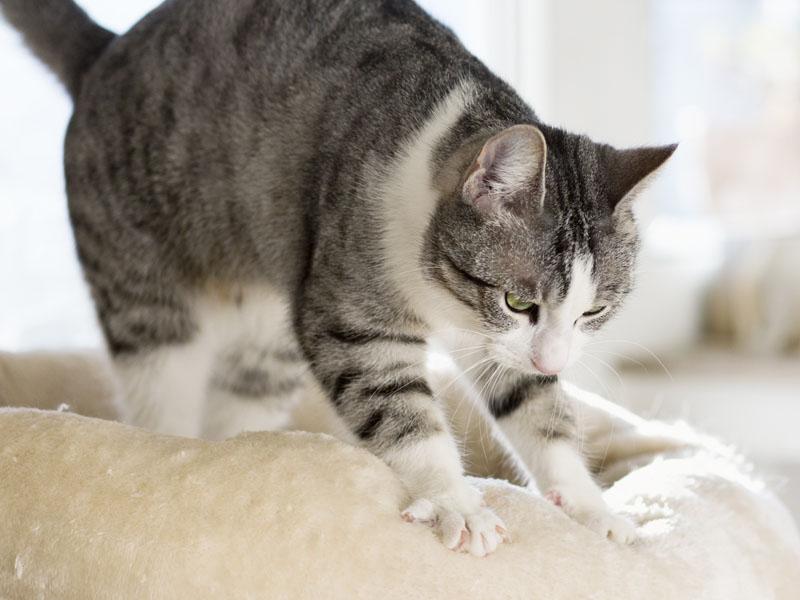 Cat kneading a fuzzy blanket