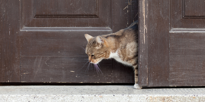 cat walking out of open door
