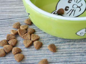bowl of cat food