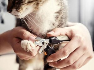 cat getting nails trimmed