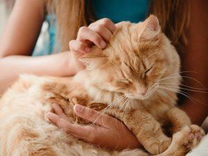 cat parent rubbing orange cat's head