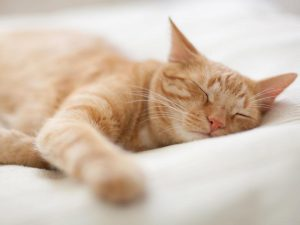 orange cat napping on bed