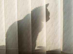 Cat shadow behind window blinds