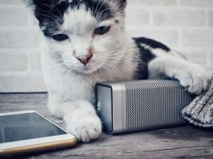 Cat next to phone and speaker