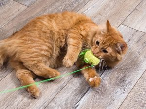 Cat playing with toy on string