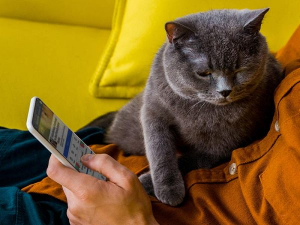 Ways to Help Shelters: host social media fundraiser, person holding phone with cat on lap