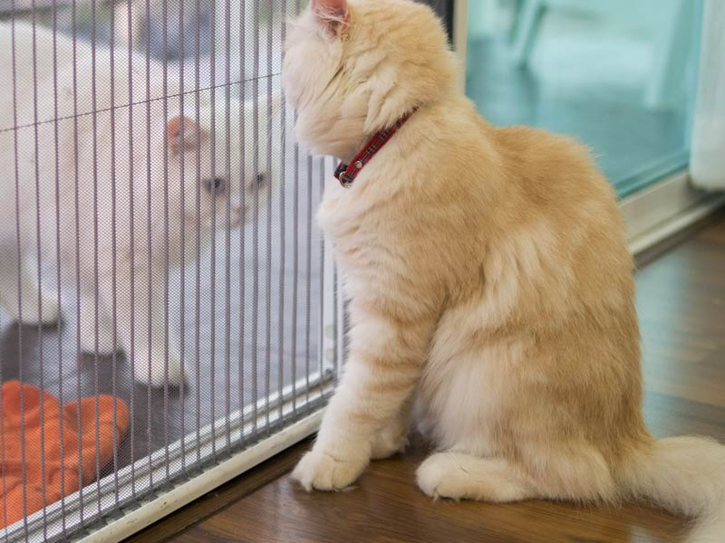 How to Introduce Cats to Each Other: 2. Let them get used to each other's scents Cats looking at each other through glass door