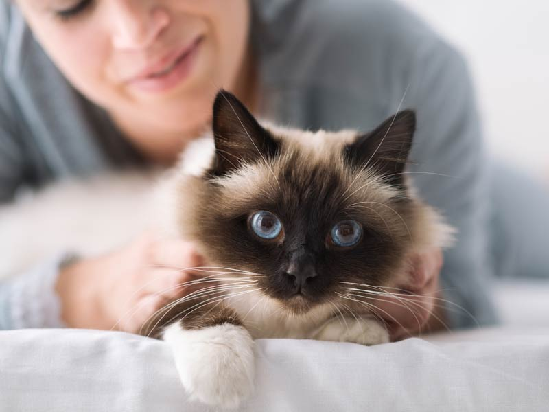 How to Introduce Cats to Each Other: 3. Spend time alone with both cats Human holding cat on bed