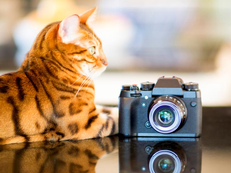 Ways to help shelters: volunteer to take portraits of animals, cat next to camera