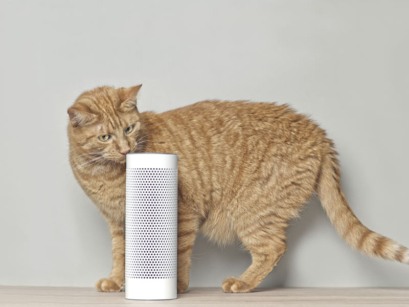 orange cat sniffing speaker